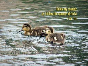1 Corinthians 11_1